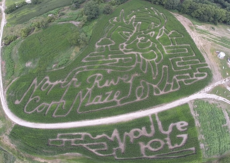 Maxwell Corn Maze front